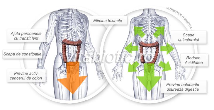 tranzit intestinal pure yucca calivita
